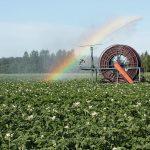 En eftermiddag med fokus på økologiske kartofler